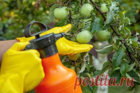 Применение биопрепаратов для обработки растений. Экомик Урожайный