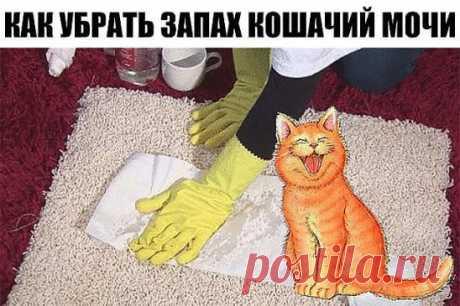КАК УБРАТЬ ЗАПАХ КОШАЧИЙ МОЧИ  Вымыть запах кошачьей мочи, а тем более меток территории котов, обычными моющими средствами невозможно. В состав мочи входят урина, уриновая кислота, урохром/уробилин, креатинин, натрий и другие электролиты. Кристаллы уриновой кислоты не растворяются в воде, поэтому их невозможно удалить обычными моющими средствами. Когда моча высыхает, мочевина разлагается бактериями, что дает явный запах аммония. При дальнейшем разложении образуются тиоли которые делают запах мо