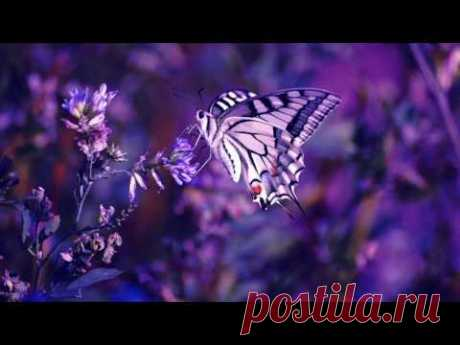 Музыка От Бессонницы Лечебная Музыка При Проблемах Со Сном И Засыпанием Музыка для Сна