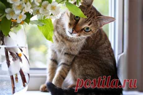 Способы уберечь кошку от опасностей, которые могут подстерегать ее дома Какие опасности могут подстерегать кошку в квартире и как защитить от них домашнего питомца
