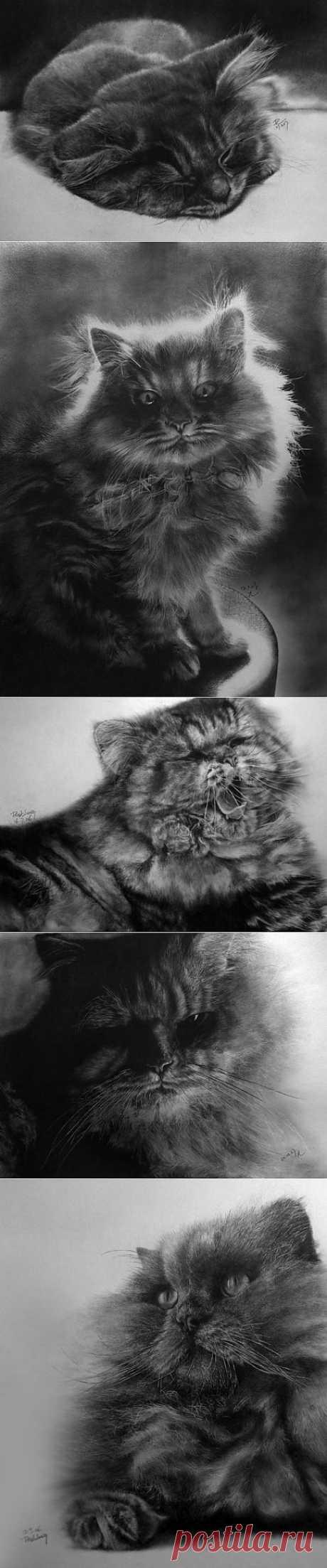 В своих работах Paul Lung использует только ватман и карандаш. Даже  ластика не находится возле него, потому что он не используется! Все  рисунки могут выполняться даже в течение 60 часов, но результат стоит  всех ожиданий и даже более того. Особенно выделилась серия работ с  кошками, излюбленными животными большинства почитателей чудесного.
