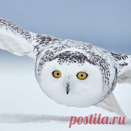 Фотографии птиц с конкурса Bird Photographer