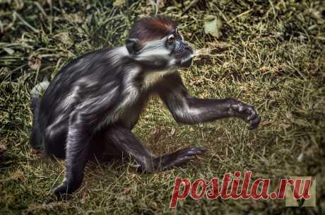 ФотоТелеграф » Животные с характером: серия работ Вики-Лии Болтер