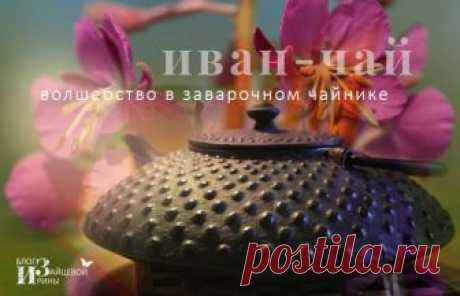 How to make Ivan - tea. Medicinal properties. Application | Irina Zaytseva's Blog