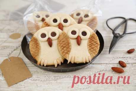 -owls.jpg