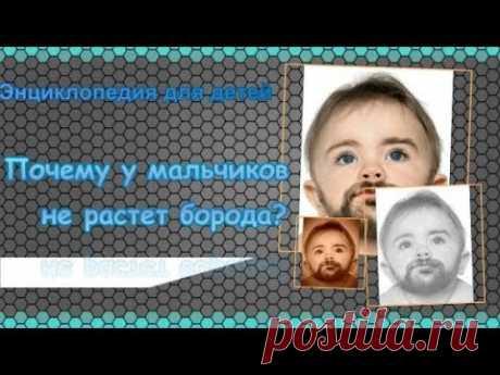 Почему у мальчиков не растет борода Энциклопедия для детей - YouTube