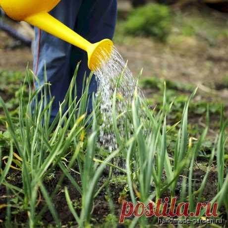 10 правил полива огородных культур растения в жару