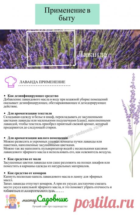 Как выращивать лаванду - памятка | Мистер садовник | Яндекс Дзен