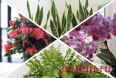 Хорошие и плохие растения по фен-шуй Покажем подборку растений и расскажем, как они влияют на энергетику в доме согласно фен-шуй.