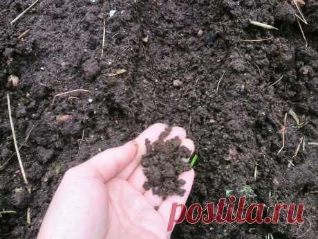 Как я делаю плодородную землю для рассады томатов. Больше не трачу деньги на покупку почвы | Дачные секреты от Виктории Радзевской | Яндекс Дзен