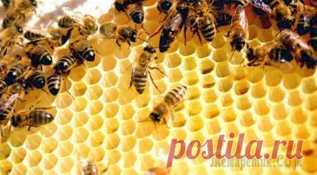 Bee uterine milk – useful and medicinal properties