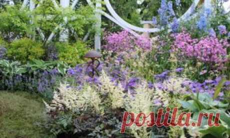 Секреты роскошного цветника: какие сочетания самые удачные