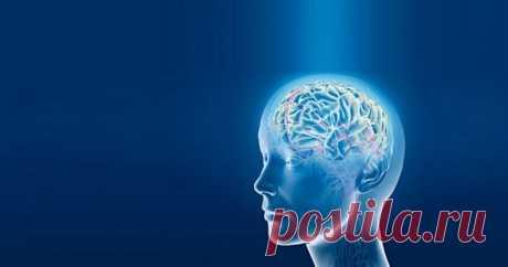 Привычки, которые восстанавливают клетки мозга