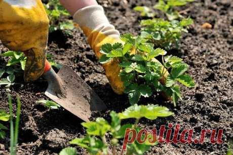 ПОЛЕЗНЫЕ СОВЕТЫ ОГОРОДНИКА   источник САДОВАЯ ФЕЯ - Дача. Сад и Огород             ПОЛЕЗНЫЕ СОВЕТЫ ОГОРОДНИКА.При высадки рассады помидоров в грунте вложите в каждую лунку жгутик соломы. Корни растения получат больше воздуха и …