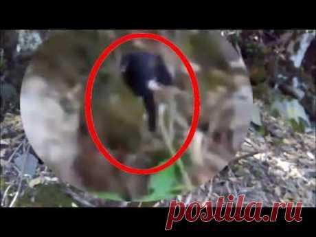 Странные существа снятые на камеру в лесу | неизвестные существа. жуткие существа в хорошем качестве - YouTube