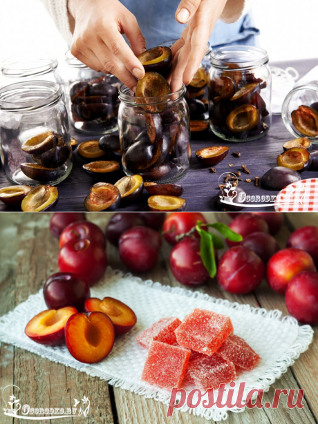 Plums for the winter – prunes, plum juice, a fruit candy, fruit jelly, jam, wine