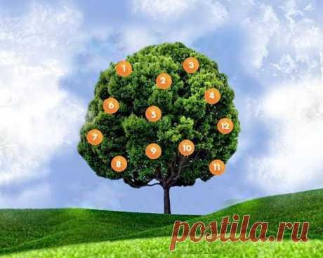 Дерево желаний.