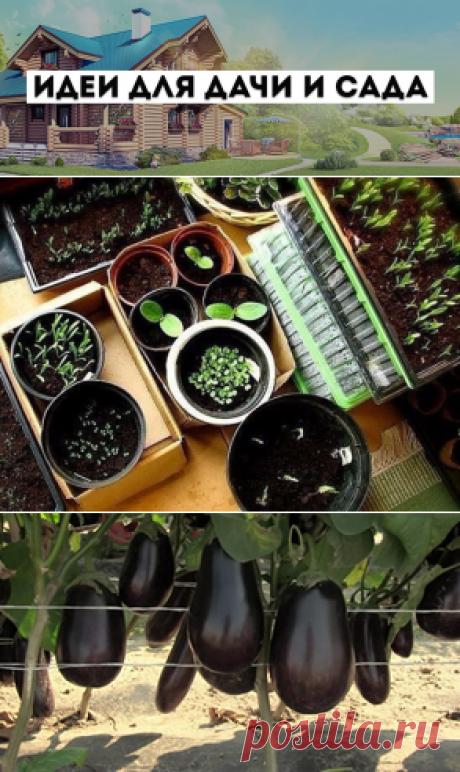 (4) Ideas for giving and a garden - Main