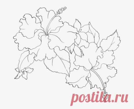 Эскизы Витражей Схемы - Flower Pattern Transparent PNG - 699x612 - Free Download on NicePNG