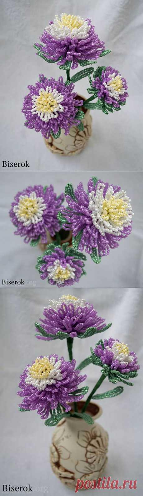 Астра или хризантема / Цветы / Biserok.org