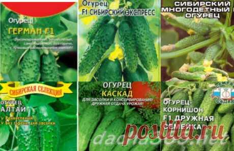 Лучшие сорта огурцов для Сибири для теплиц: отзывы, характеристика и описание, урожайность, фото, особенности выращивания