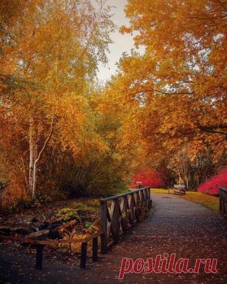 Плантация Изабеллы в Ричмондском парке. Это место самое волшебное осенью и весной! От золотистых сияний 🍁 в октябре до ярких цветений азалий в мае! 🌺