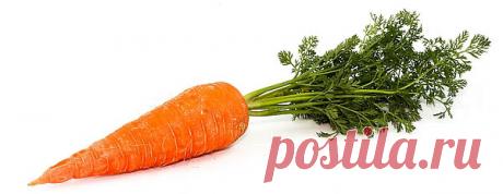 Когда убирать морковь, признаки созревания и сроки уборки моркови