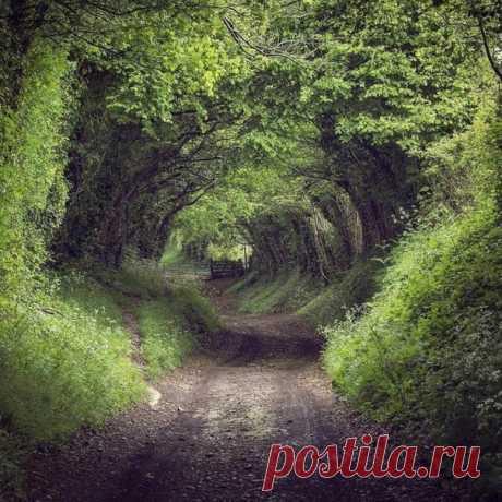 Сказочная аллея в лесу, Англия