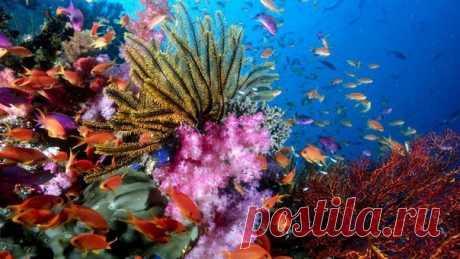 Удивительные коралловые рифы