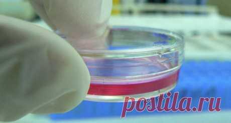 Российские ученые нашли универсальный природный антибиотик Исследователи Тюменского университета (UTMN) вместе со своими коллегами из других регионов страны первыми нашли универсальный природный антибиотик, способный преодолеть устойчивость патогенов к