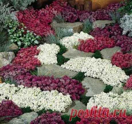 Растения-«коврики»