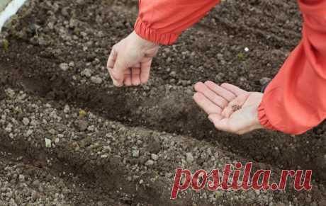 Посадка цветов осенью: какие цветы можно и нужно сеять под зиму   Первая полоса (Огород.ru)