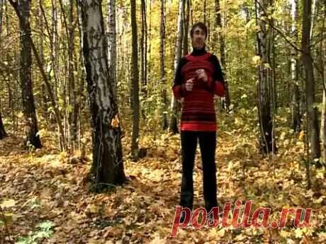 УПР.№4--КОШКА--Дыхательная гимнастика Стрельниковой от всех болезней | Bodymaster О спорте и фитнесе | Яндекс Дзен