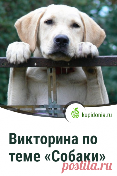 Викторина по теме «Собаки». Интересный тест о собаках из серии «Домашние животные». Проверьте свои знания!