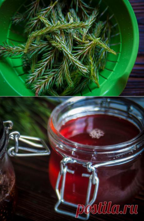 Мёд из сосновых свечек. Или кусочек леса к чаю