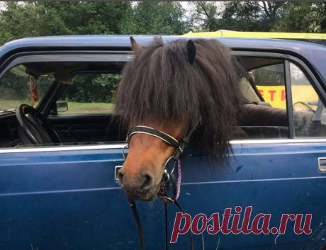 Пони: Как появились крошечные лошадки?