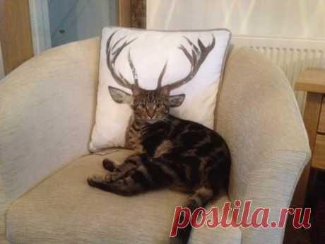 Мой кот - олень.  Позитив из позитива, смотреть далее...  >>>>>>>
