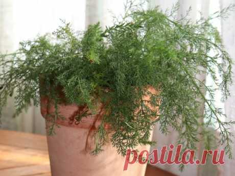 9 лекарственных растений, которые нужно выращивать дома зимой - Огород, сад, балкон - медиаплатформа МирТесен