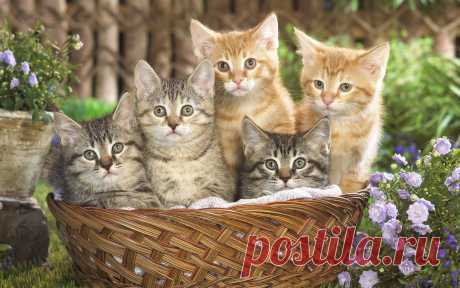 Коты.