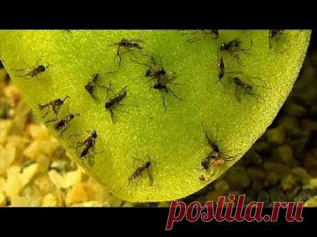 Земляные мошки в горшке? Как с ними бороться и защитить растения?