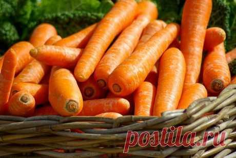 Морковь как средство профилактики аутоиммунных заболеваний