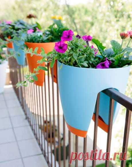 На балконах цветы изумляют обилием красок, Словно вспышки созвездий на блёклых фасадах домов. Все стремятся свой быт хоть немного, хоть чем-то украсить, Чтоб в уют возвращаться зелёных своих уголков.