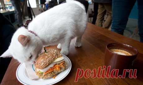 Фотогалерея: В Нью-Йорке открылось кафе для кошек - Новости Mail.Ru