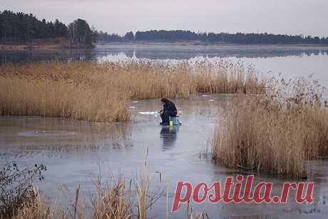 El primer hielo y zhor los peces \/ la extracción Rica