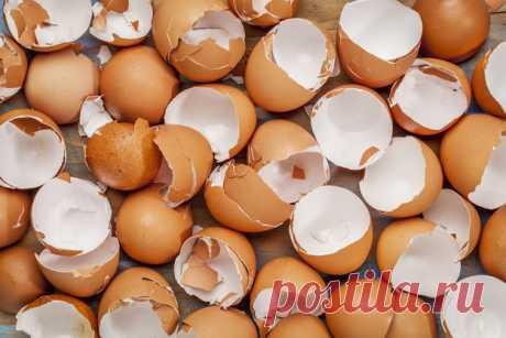 10 веских причин не выбрасывать яичную скорлупу — Полезные советы
