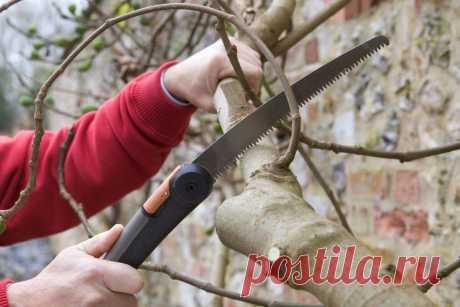 Как обрезать Яблоню осенью. Пять правил обрезки, которые должен знать Каждый дачник | Все о цветоводстве | Яндекс Дзен