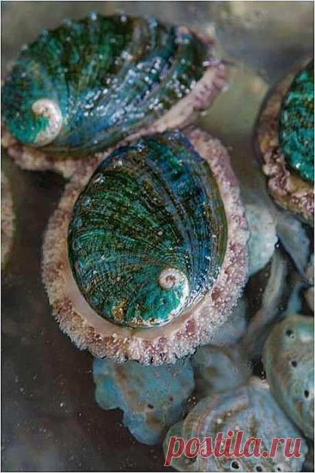 Beautiful Shells   Beach Treasures