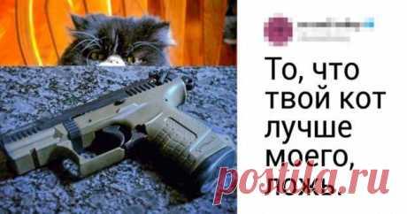 В твиттере спорят о том, чей кот самый крутой. Ваш любимец тоже должен поучаствовать ( 20 фото ) . Тут забавно !!!