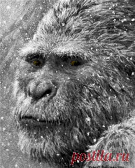 Снежный человек /  Статьи  Снежный человек (йети, сасквоч, бигфут) — легендарное человекообразное существо, якобы встречающееся в различных высокогорных или лесных районах Земли. Его существование утверждается многими энтузиастами, но на текущий момент не подтверждено. Есть мнение, что это реликтовый гоминид, то есть млекопитающее, принадлежащее отряду приматов и роду человек, сохранившееся до наших дней с доисторических времен.........