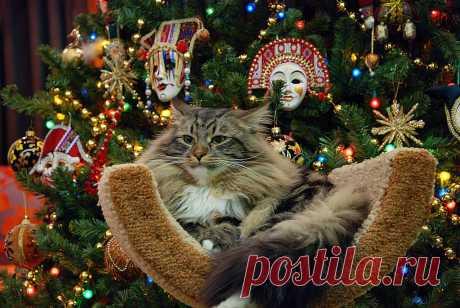 Новогоднее котиковое настроение